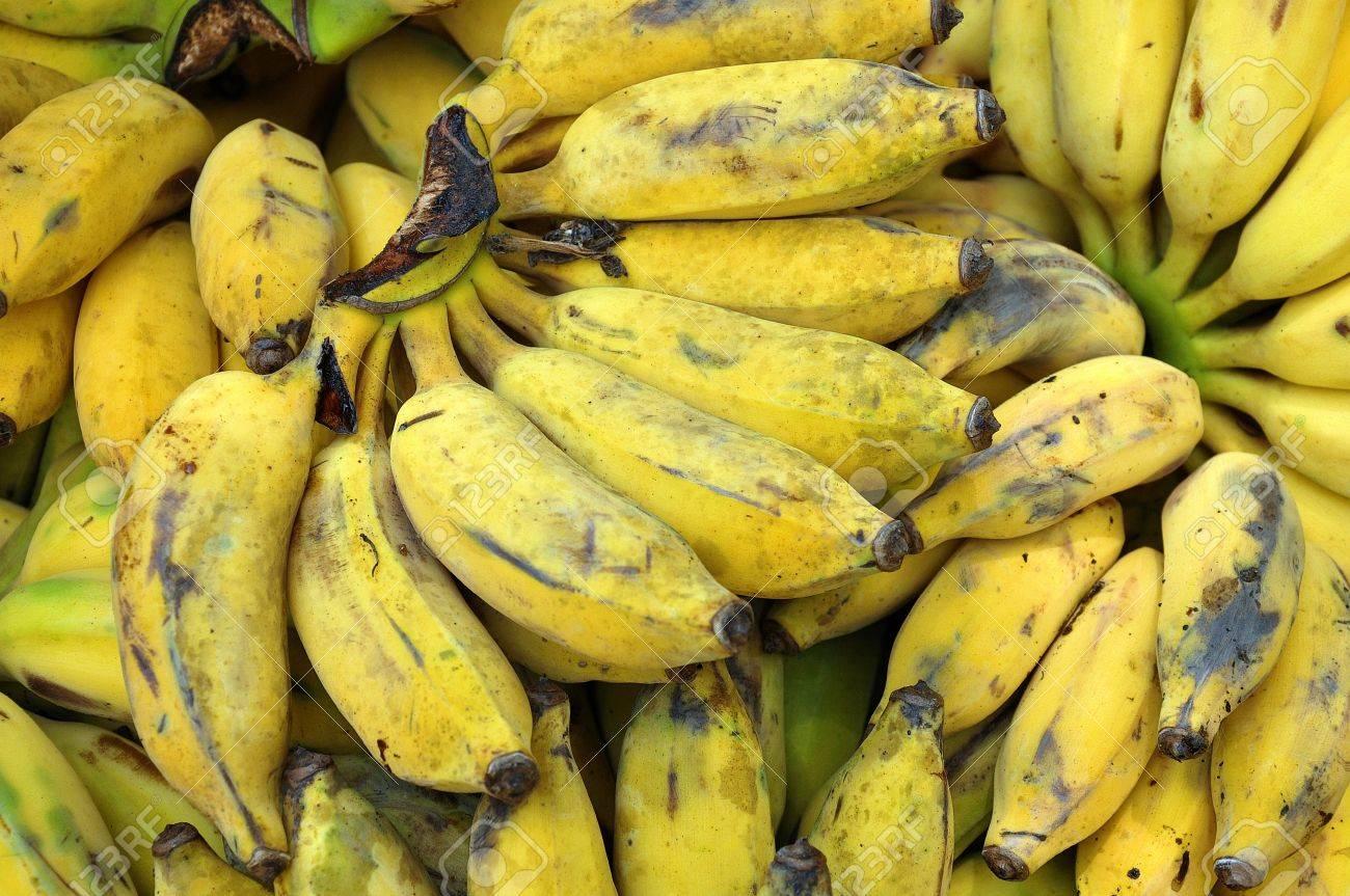 Pianta Di Banana Foto la pianta di banana è il più grande pianta erbacea