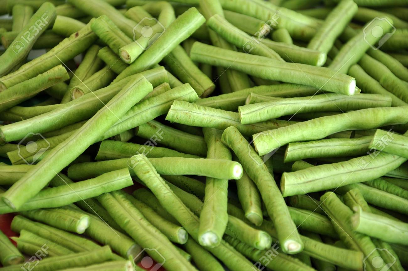 Yardlong beans are quick-growing and daily checking/harvesting is often a necessity. Stock Photo - 14638104