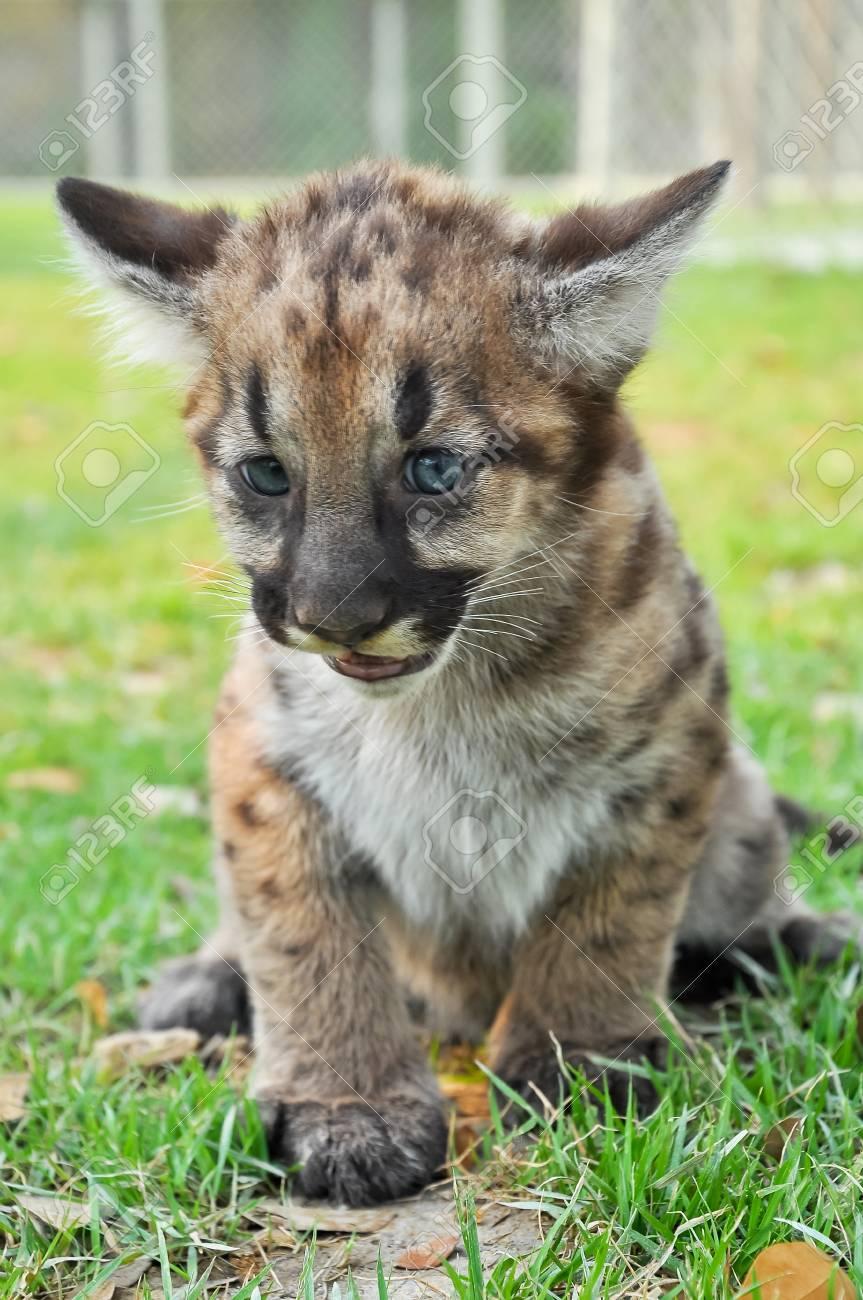 puma bebe