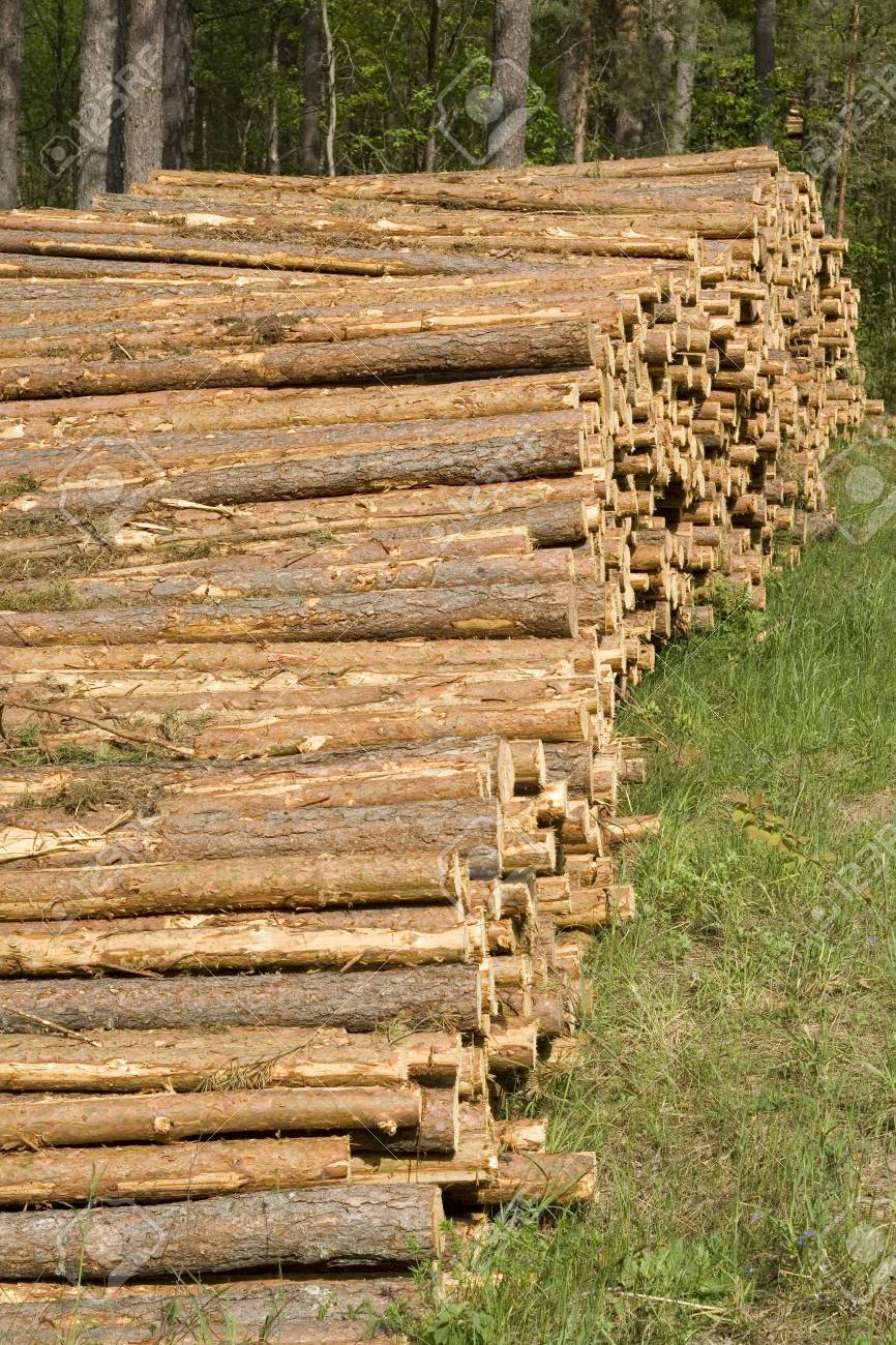 Lumber in a forest. Stock Photo - 3108555