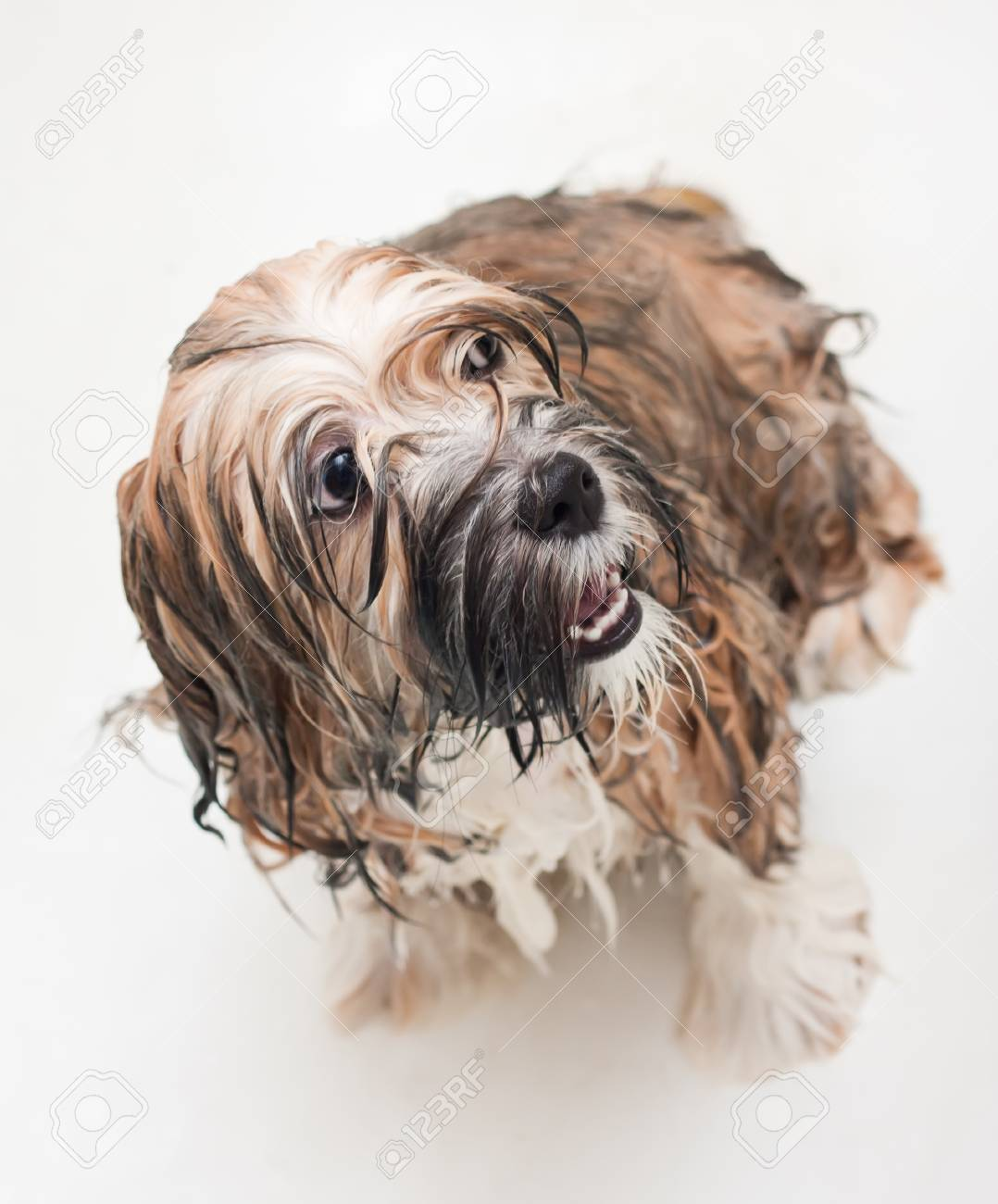 Wet puppy taking a bath on a gray background Stock Photo - 8396509