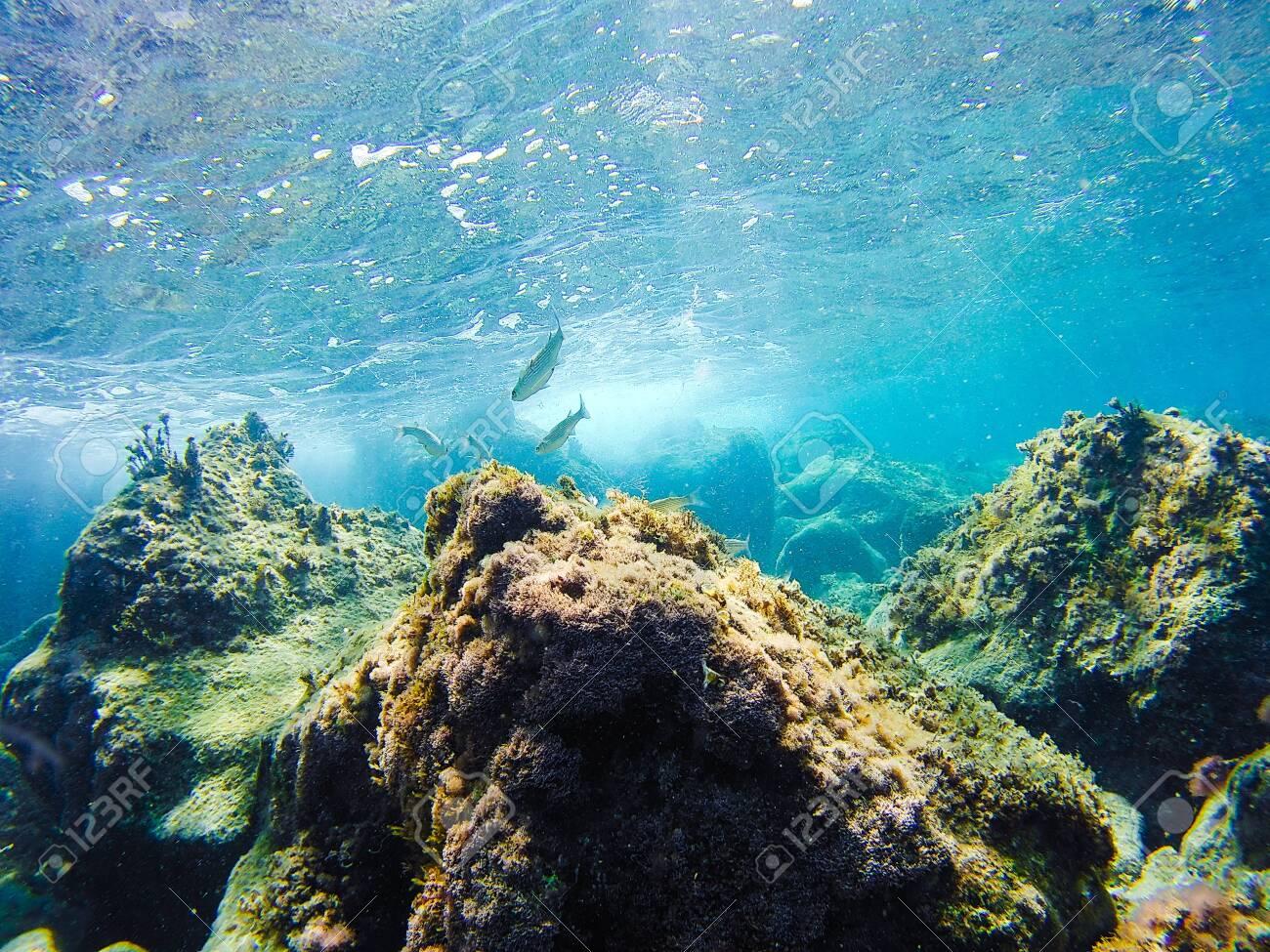 Colorful underwater vegetation in the Mediterranean sea - 138111148