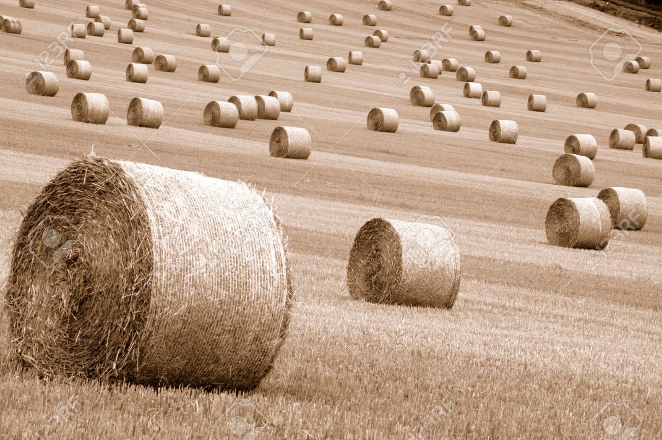 field of straw balessepia toned Stock Photo - 685729