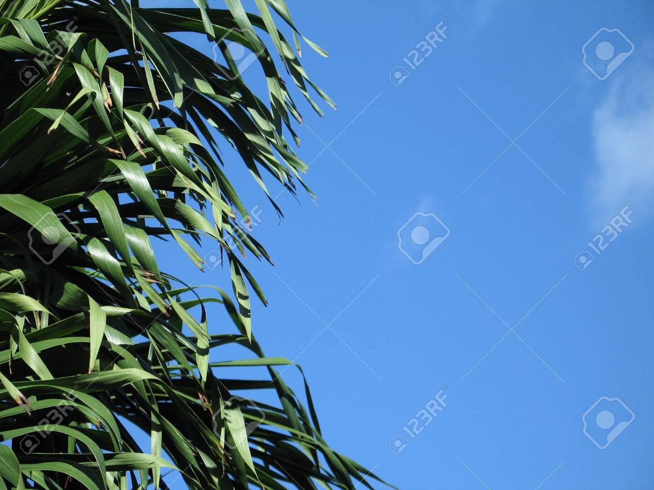 tree leaves Stock Photo - 4102177