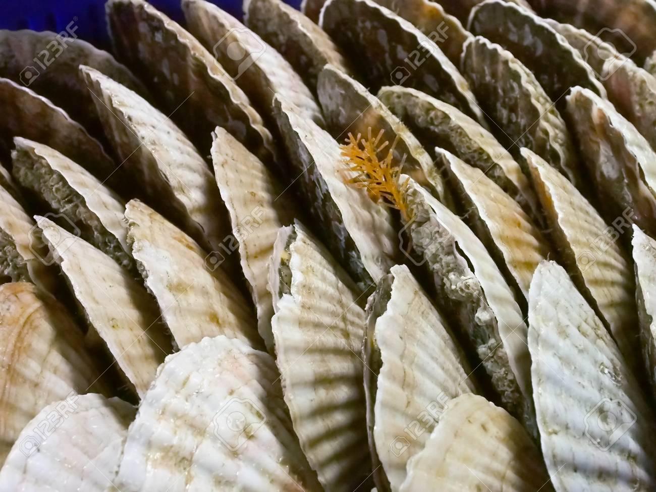 Close up of fresh shellfish, sea shell at Fish market in Taipei