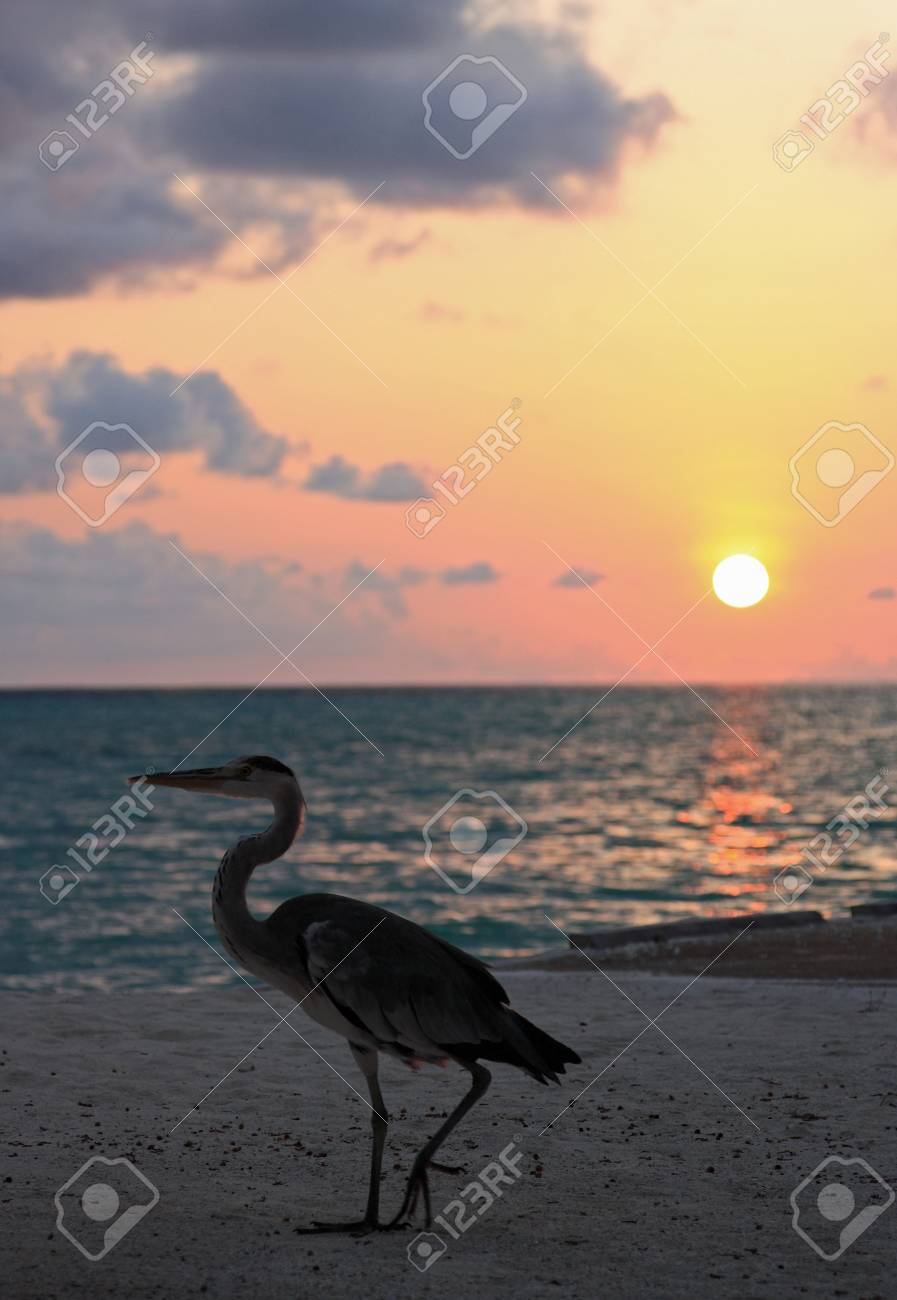 heron end sunset Stock Photo - 12080962