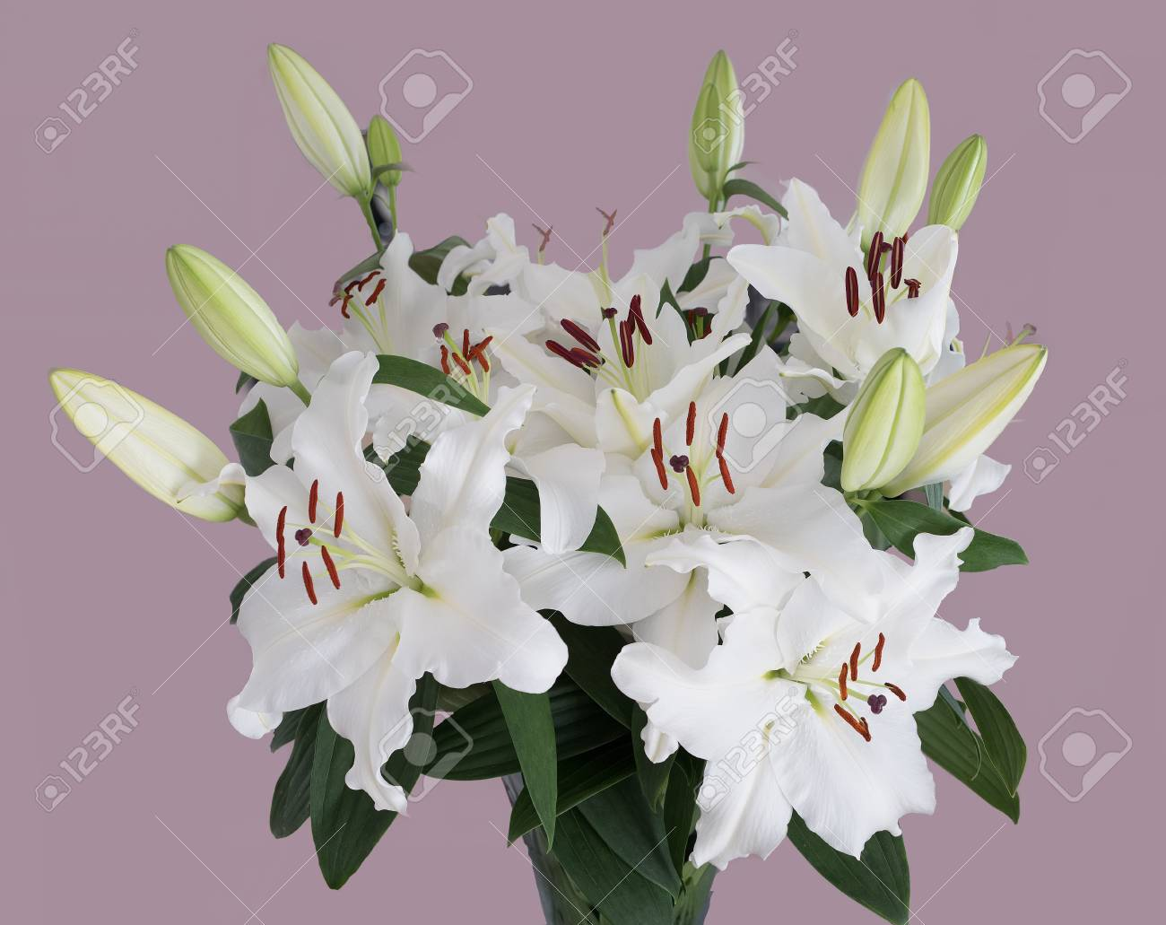Beautifu Lillies In A Bunch Set On A Dusky Pink Background Flowers