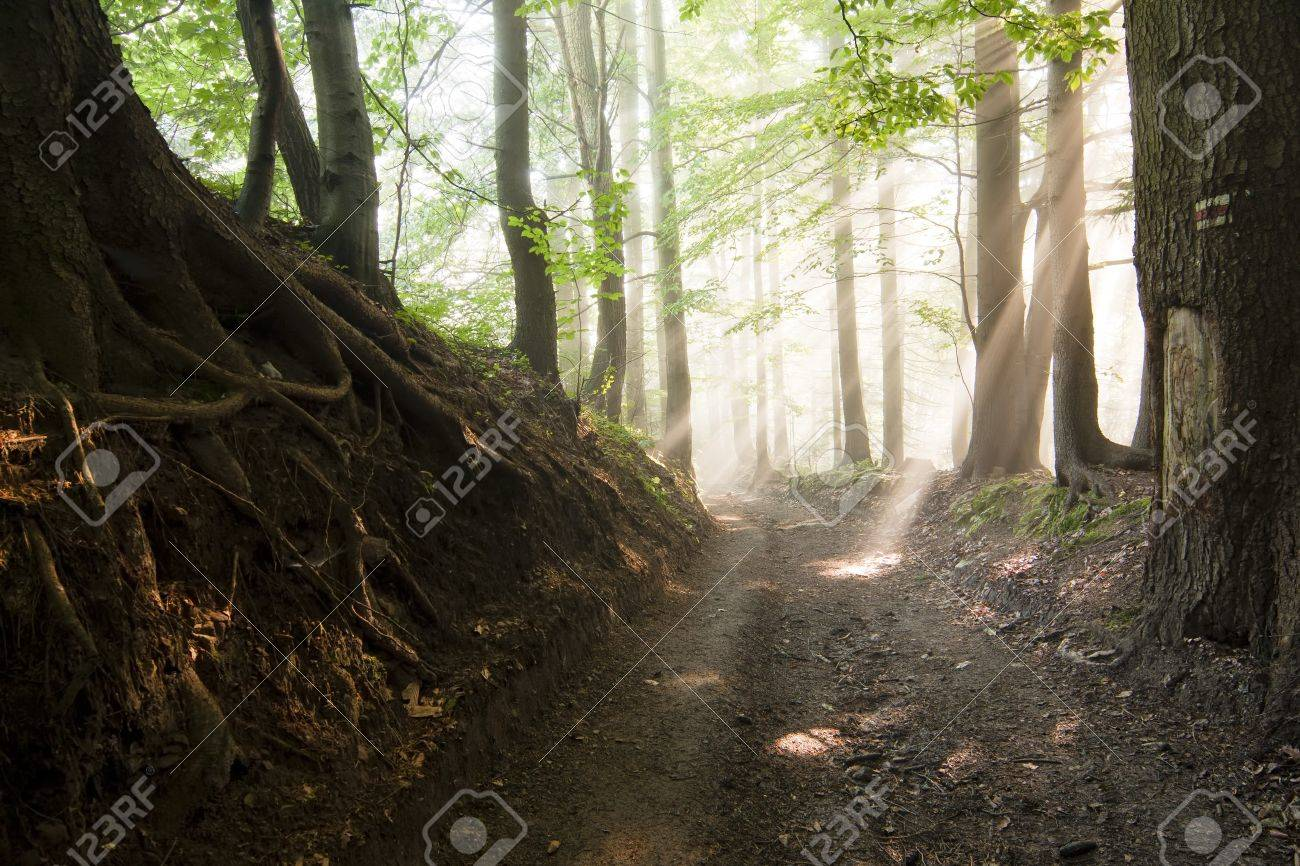 Morning sun, shining through the trees, a road through a forest with fog Stock Photo - 7445583