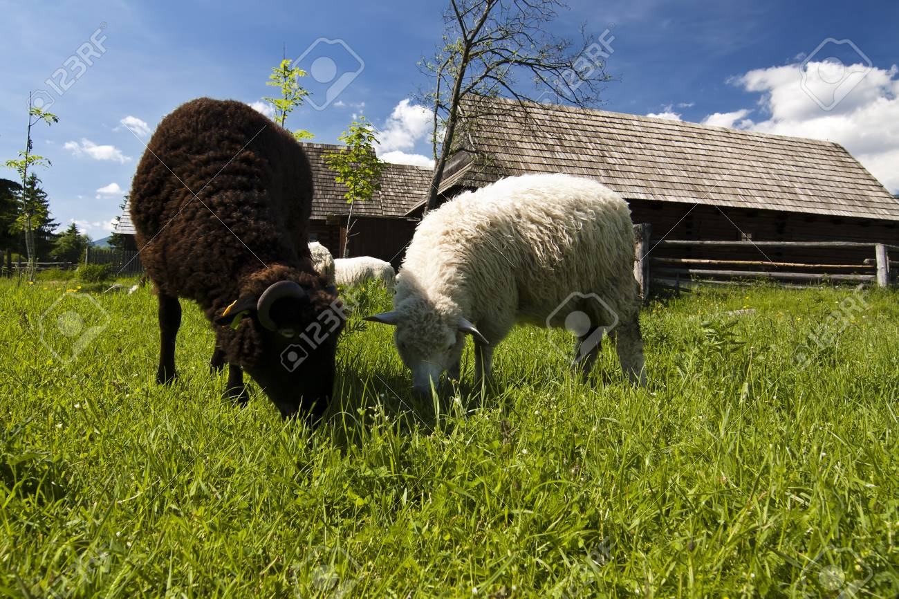Old village with sheeps in Slovakian countryside Stock Photo - 7445589