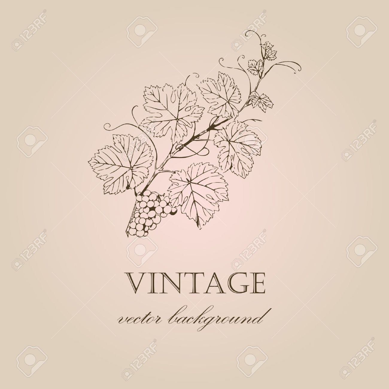 Vintage background with grape branch Stock Vector - 7705760