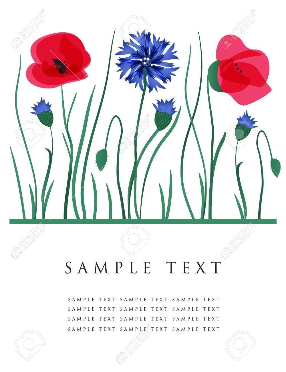Cornflowers and poppies.  card. Stock Vector - 7705560