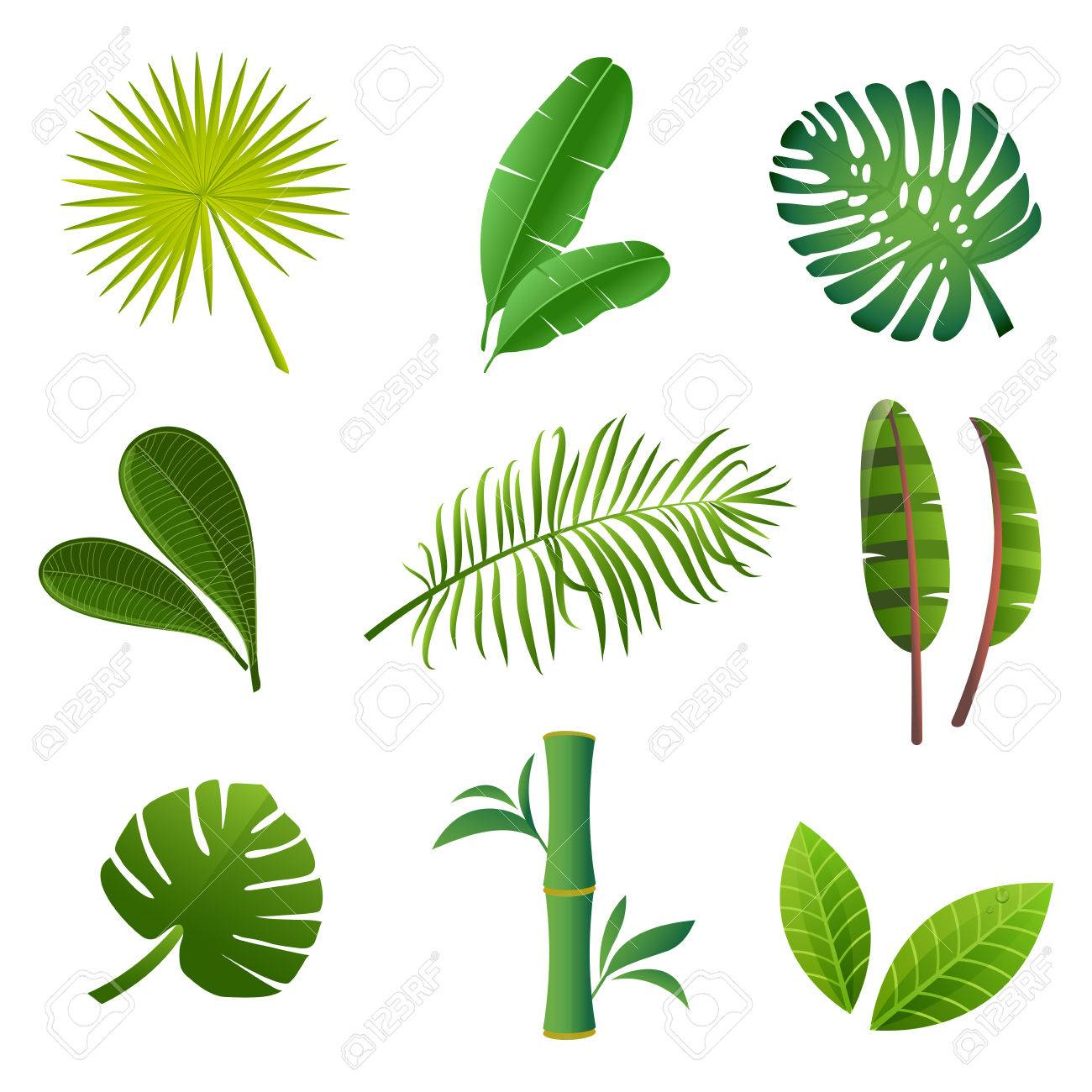 tropical plants set vector illustration of green leaves royalty rh 123rf com vector plans for live edge binder vector plant leaves