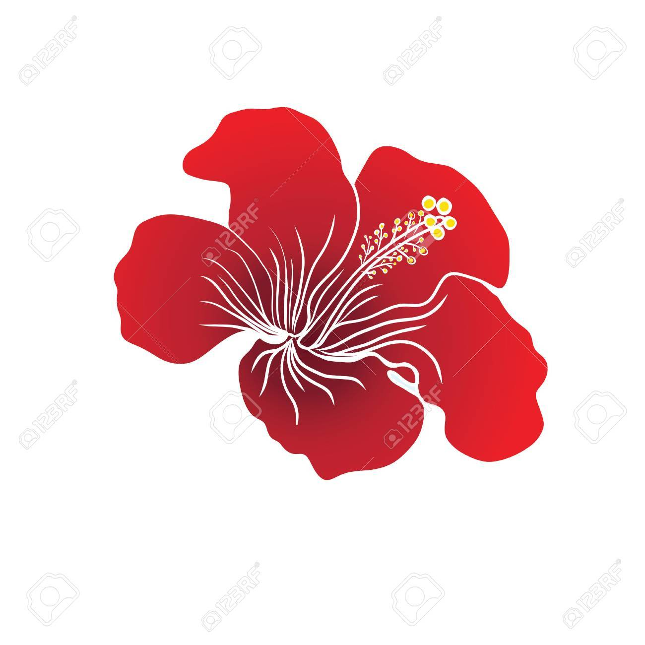 Red Hibiscus Flower On White Background Vector Illustration
