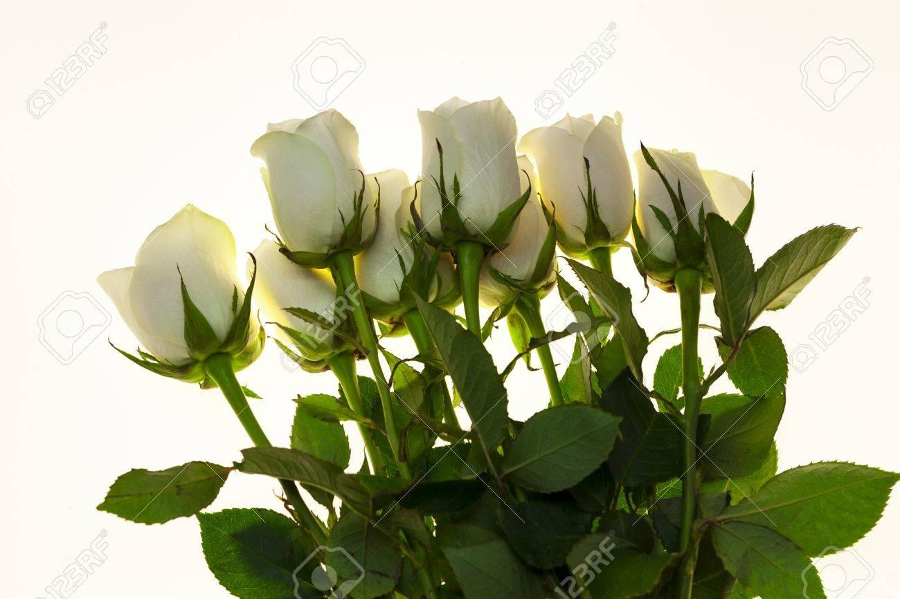 Schone Weisse Rosen Im Blumenstrauss Hintergrund Fur Hochzeitskarten
