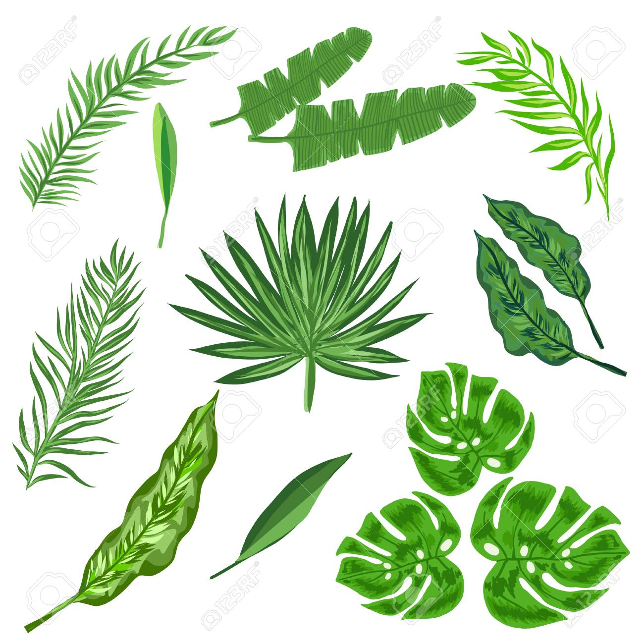 Different Tropical Leaves Set Vector Palm Leaves On White Background Royalty Free Cliparts Vectors And Stock Illustration Image 99303298 Discover 24 types of tropical foliage house plants for your home and workplace. different tropical leaves set vector palm leaves on white background