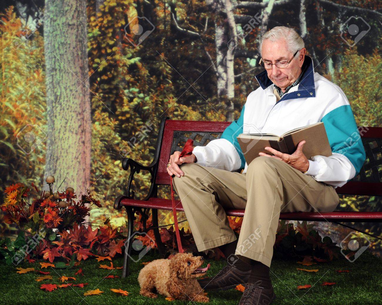 A senior man reading on a park bench, his poodle resting at his feet Stock Photo - 13531528