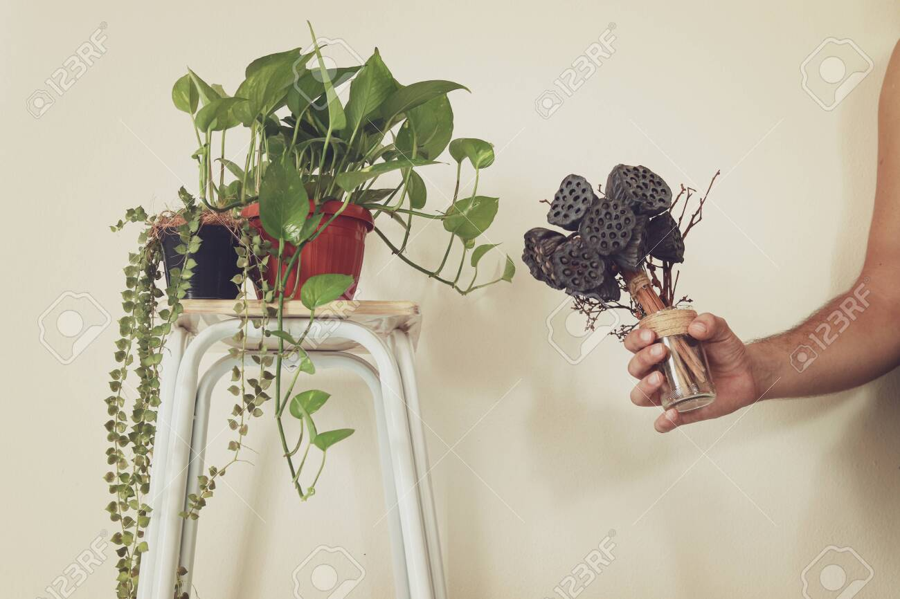 Spring Time Inspired Home Decoration Using Houseplants To Create Stock Photo Picture And Royalty Free Image Image 139755278