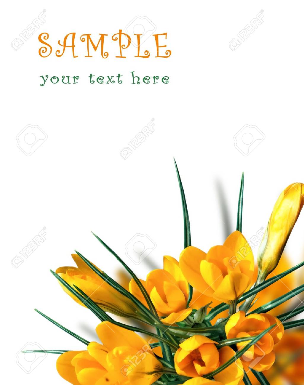 Beautiful Spring Flowers Background Stock Photo - 11576225
