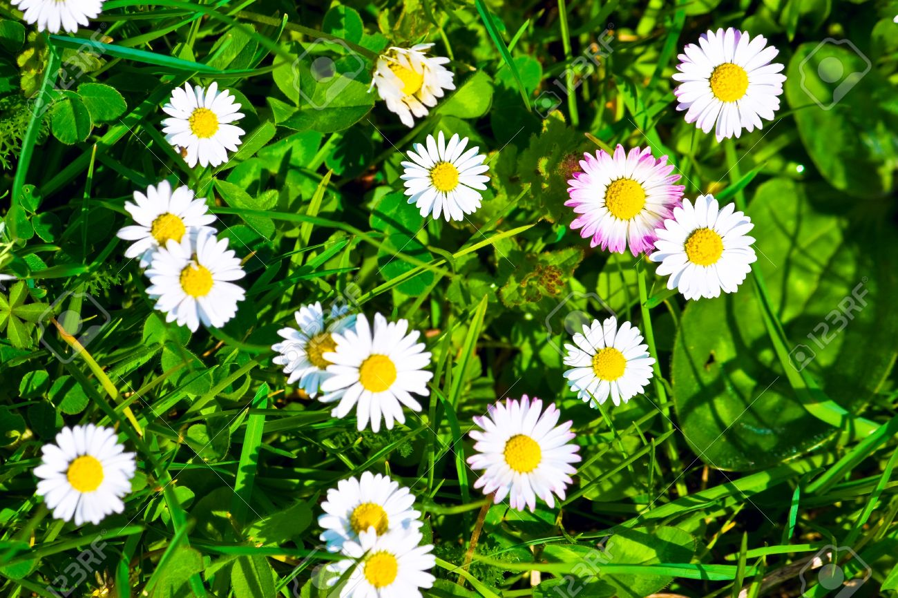 grass and flowers background. top view of green grass and flowers background stock photo 12876955 e