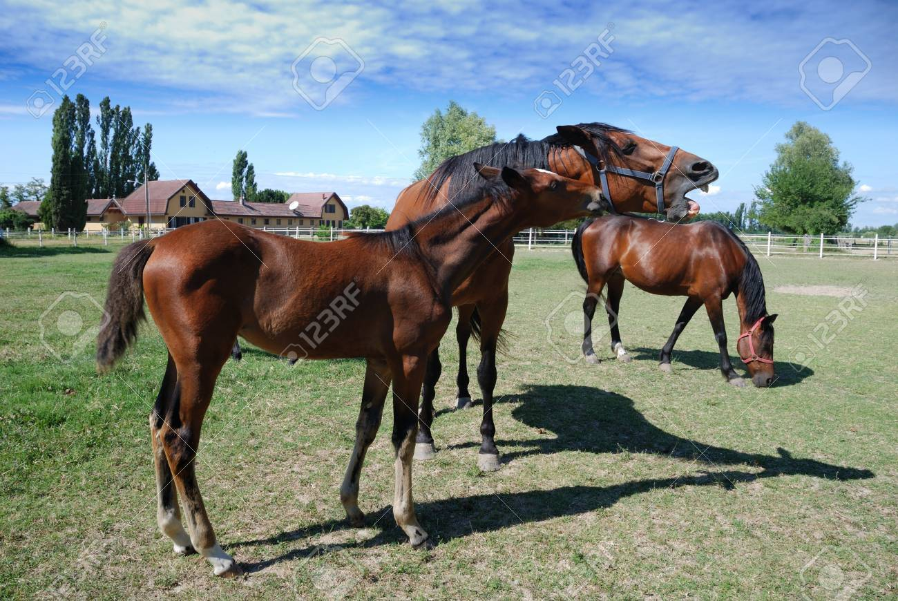 mares and foal on the farm Stock Photo - 10037340