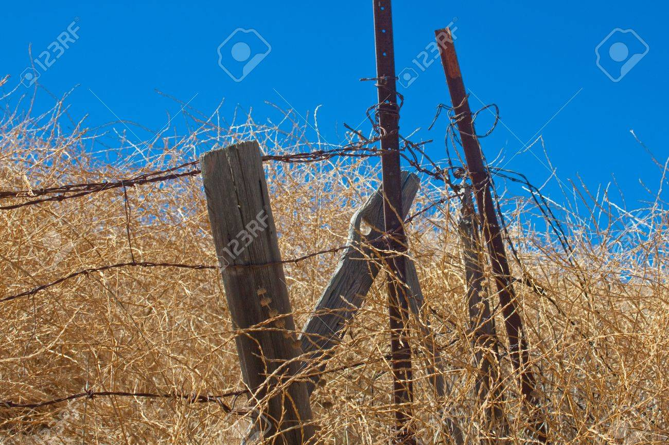 a horizontal shot of rusty barbed wire and rotting wooden fence posts in a dry summer