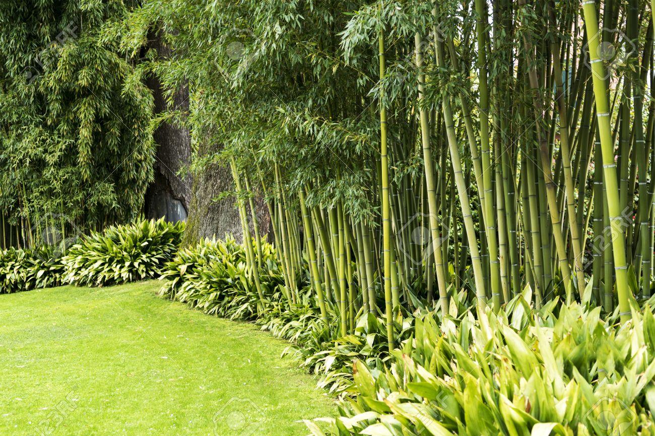Jardin Decorado Con Canas De Bambu Fotos Retratos Imagenes Y - Jardin-bambu