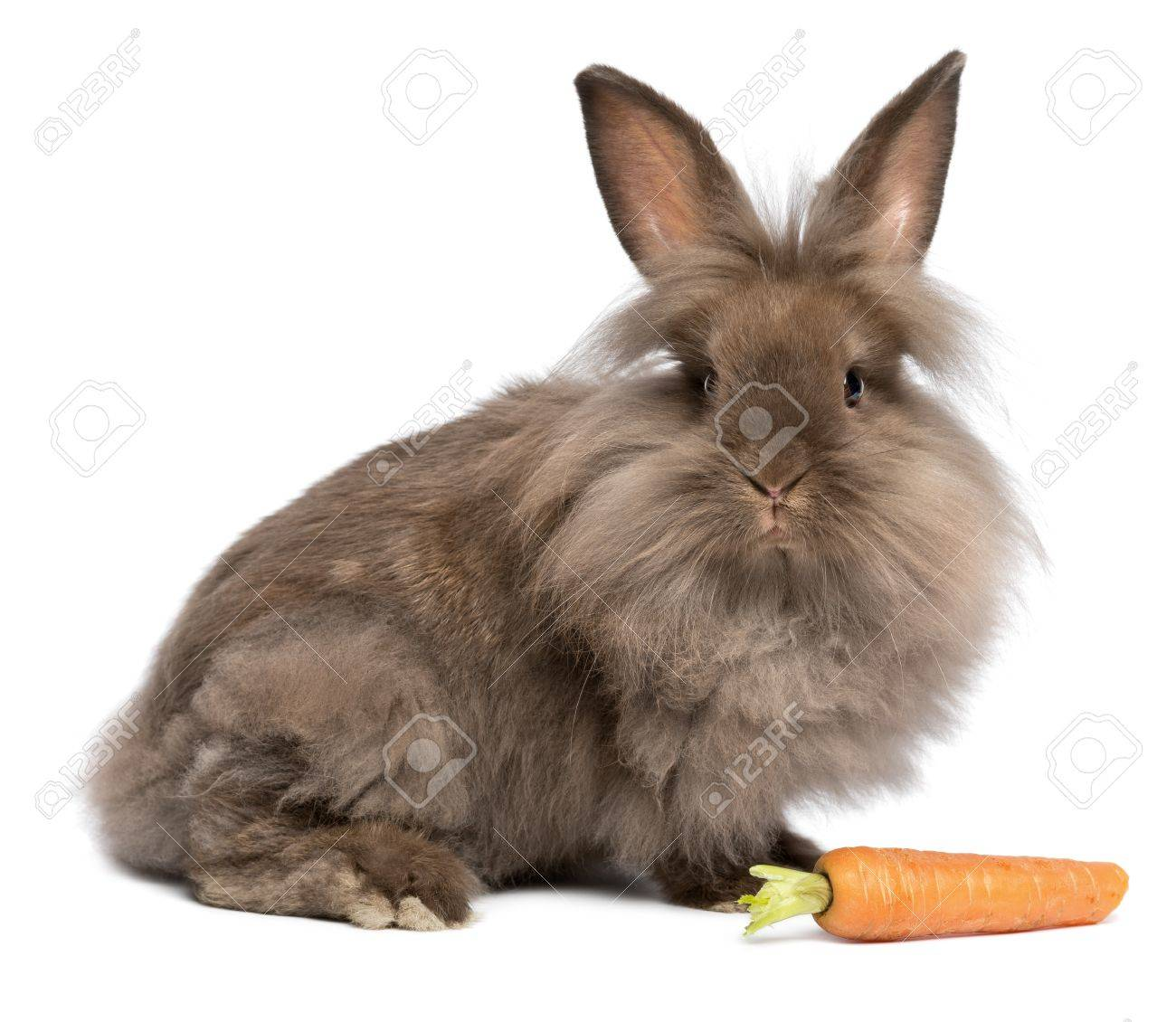 Bunny Carrot Bunny Rabbit With a Carrot