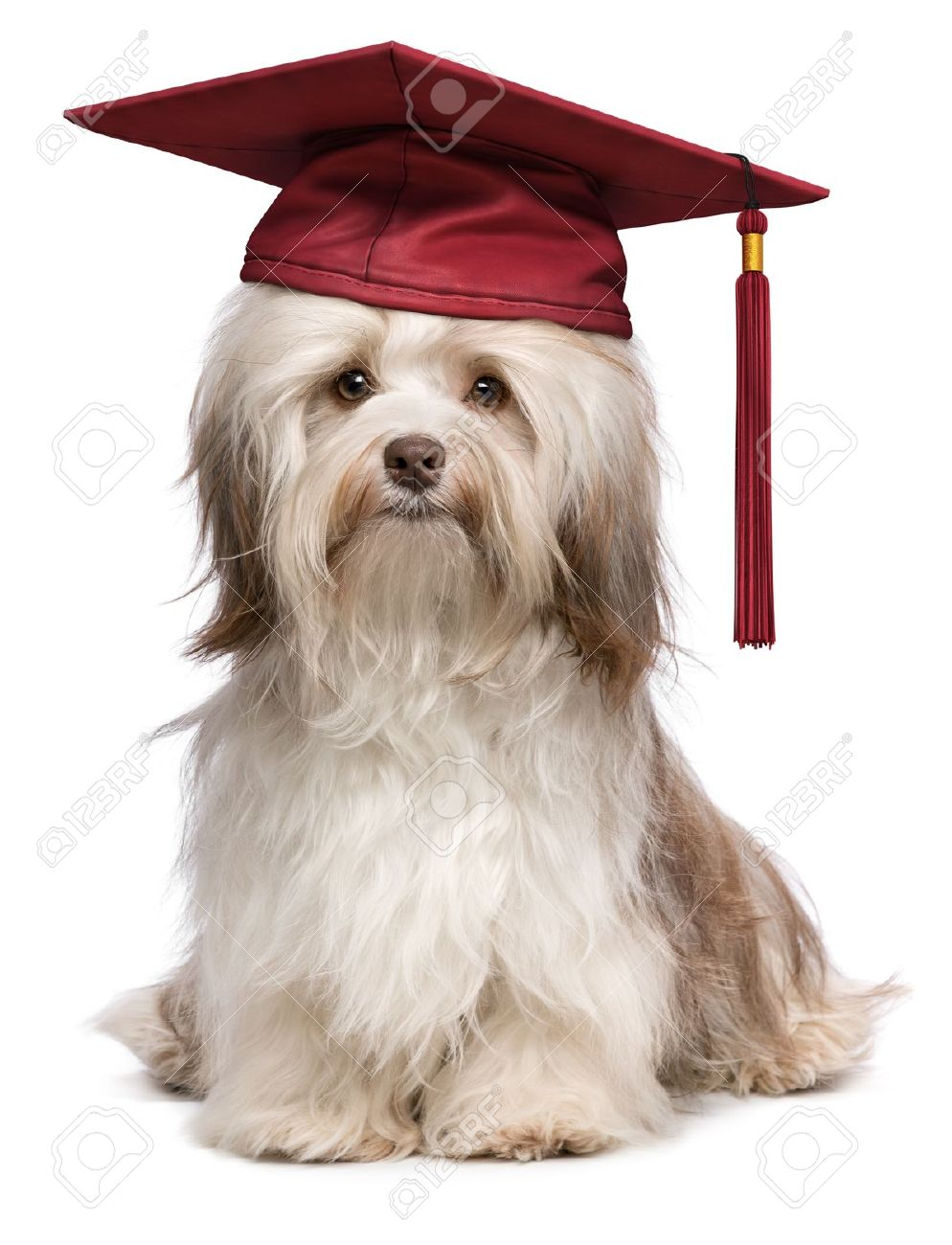 Contemporary Dog Cap And Gown Gift - Images for wedding gown ideas ...