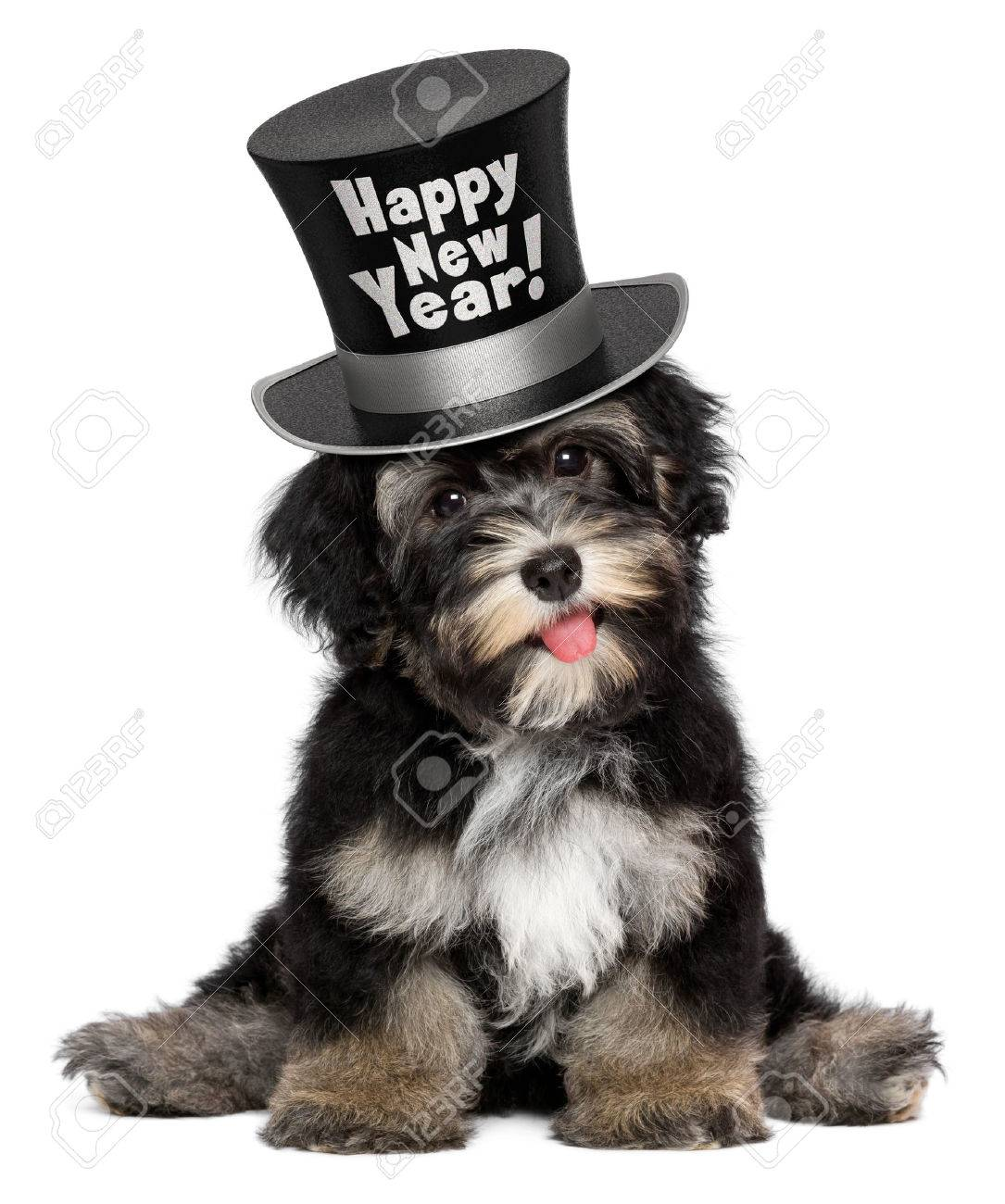 a happy smiling havanese puppy dog is wearing a black happy new year top hat