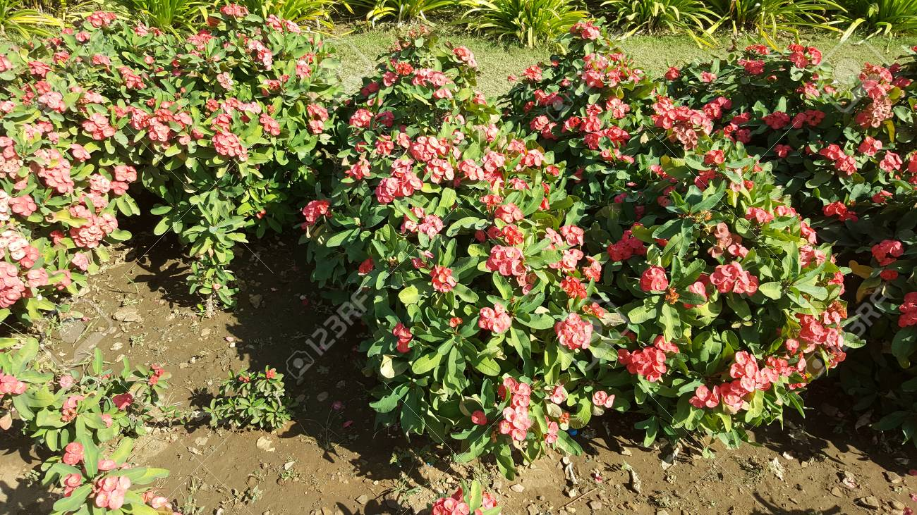 ganesh udyan jardín, kota, rajasthan desarrollado en  hectáreas, tiene   mil árboles con sombra y plantas de flores de colores, lugar adecuado para