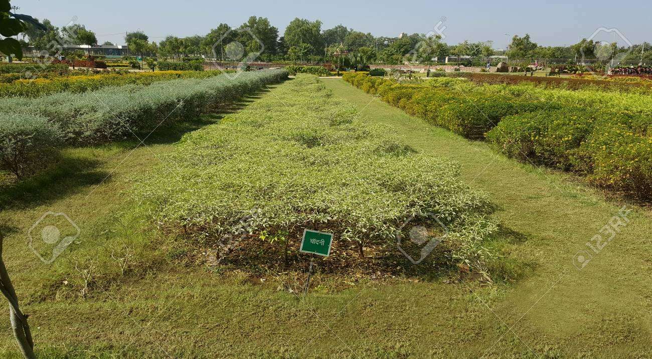 Piante Da Giardino Ombroso il giardino di ganesh udyan, kota, rajasthan si è sviluppato su 25 ettari,  ha 8 mila alberi ombrosi e piante da fiore colorate, luogo adatto per il