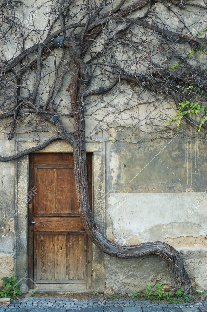 Vintage Tür vintage tür und alten krummen baum im zentrum von prag lizenzfreie