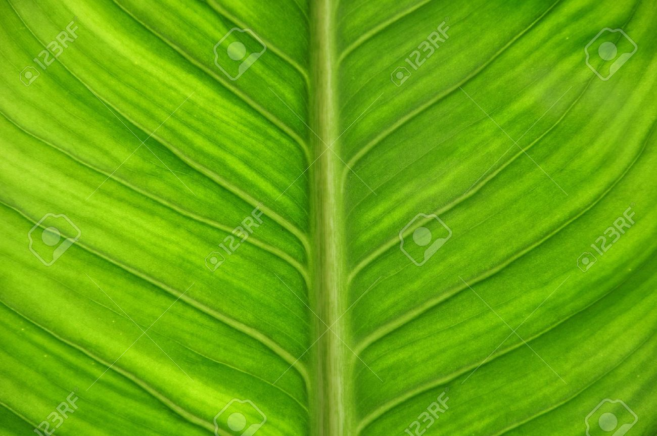 Green leaf as close up Stock Photo - 7651560