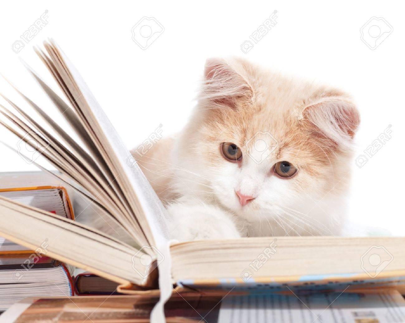 Little cat read a book - 11545111