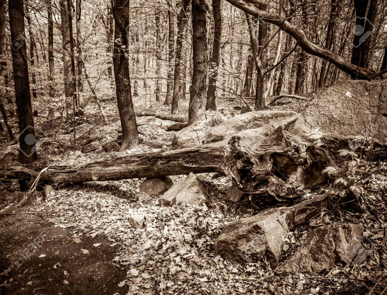 Entwurzelte Bäume Fallen Baum Im Wald Vintage Style Getönten Bild