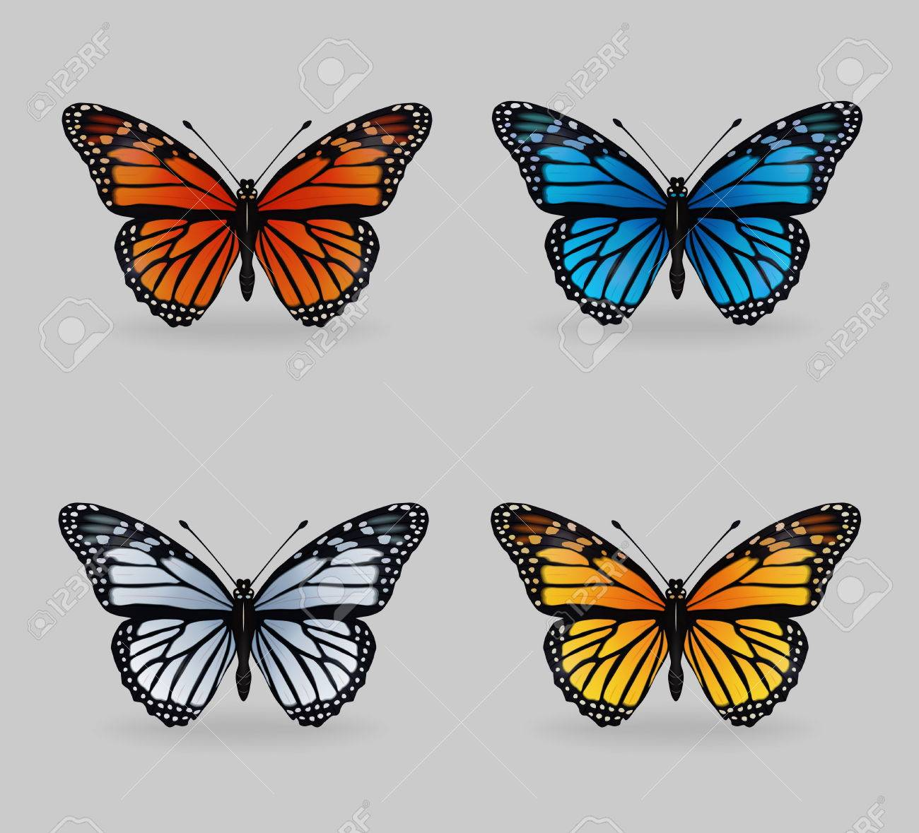 A Collection Of Vibrant Multy Color Insect Monarch Tiger