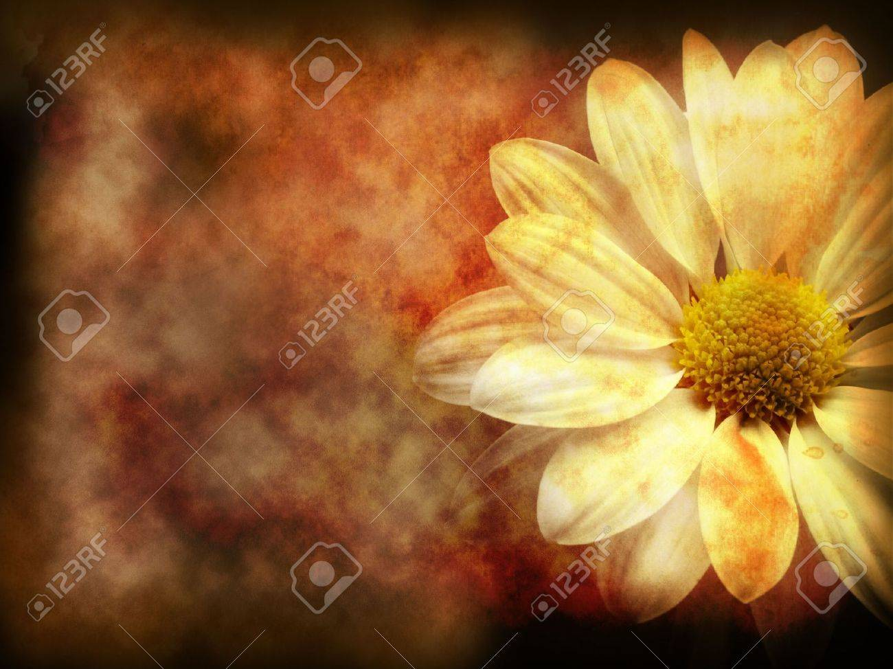 floral grunge background on texture of old paper Stock Photo - 6757567