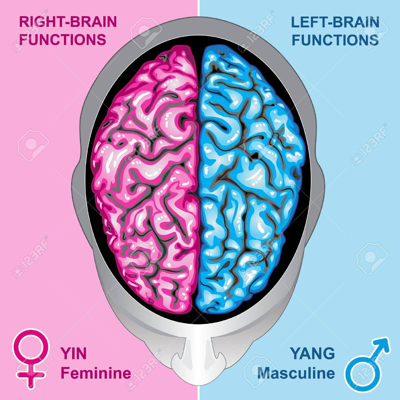 Human brain left and right functions Stock Vector - 9640690