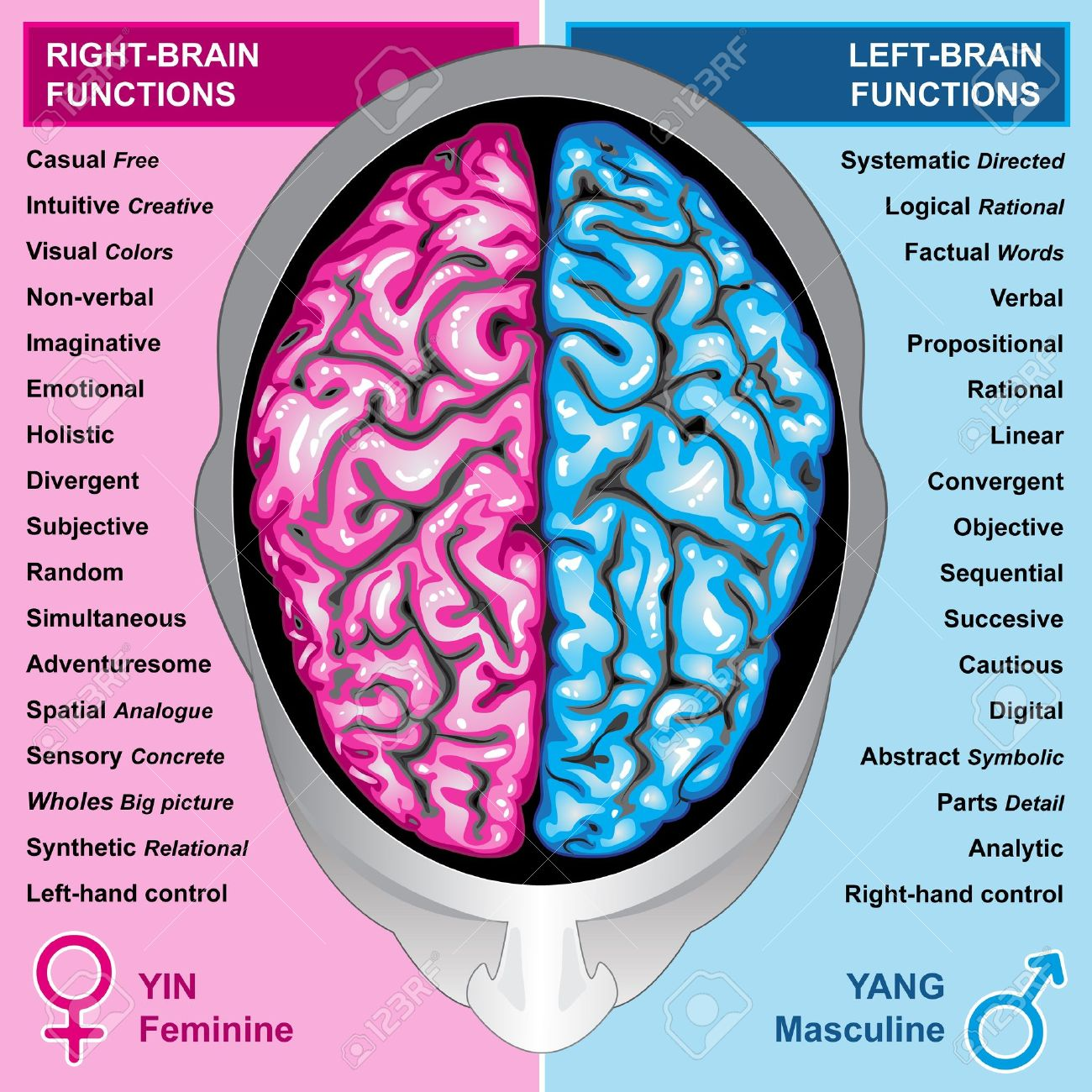 Human brain left and r...