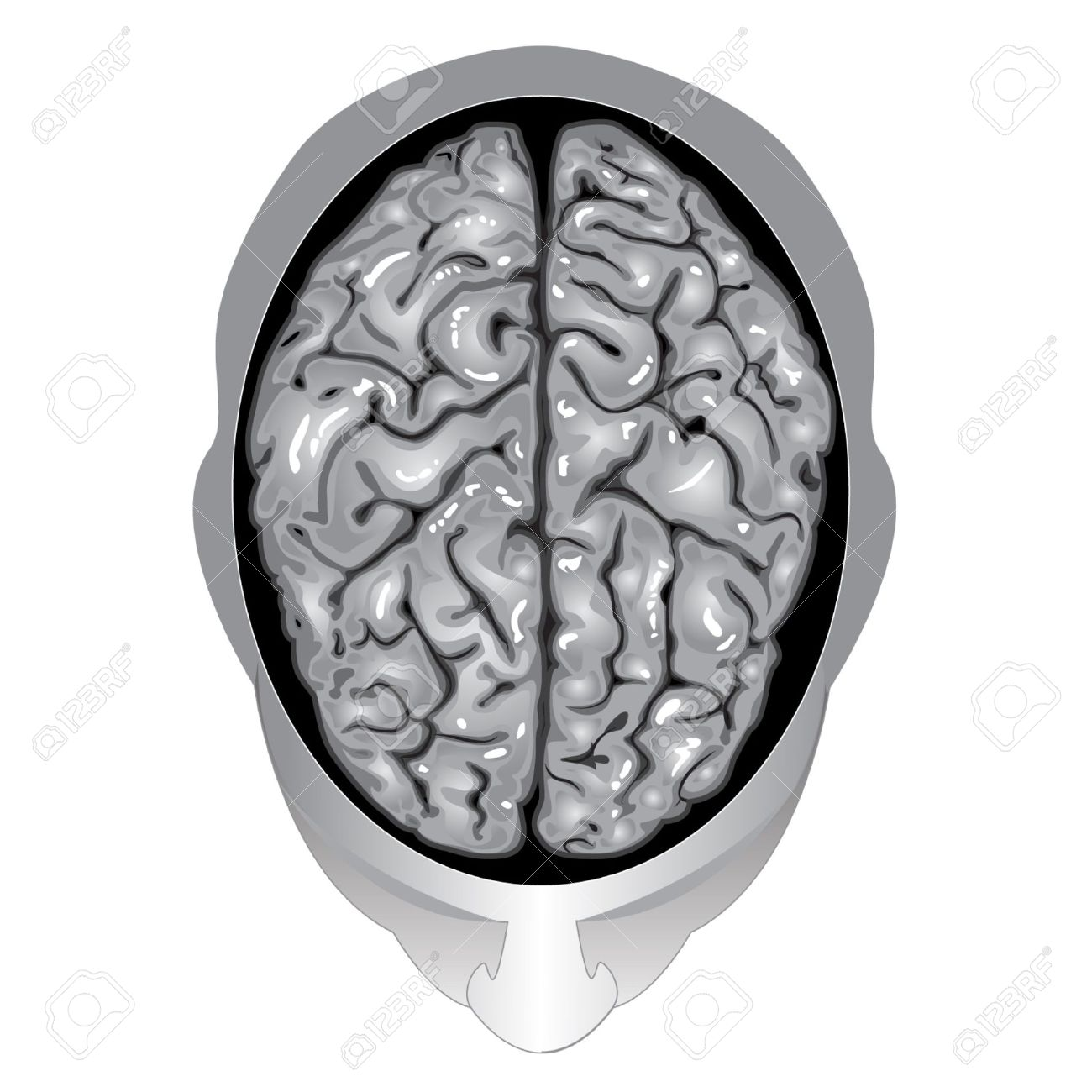 Human brain top view royalty free cliparts vectors and stock human brain top view stock vector 9806987 ccuart Choice Image