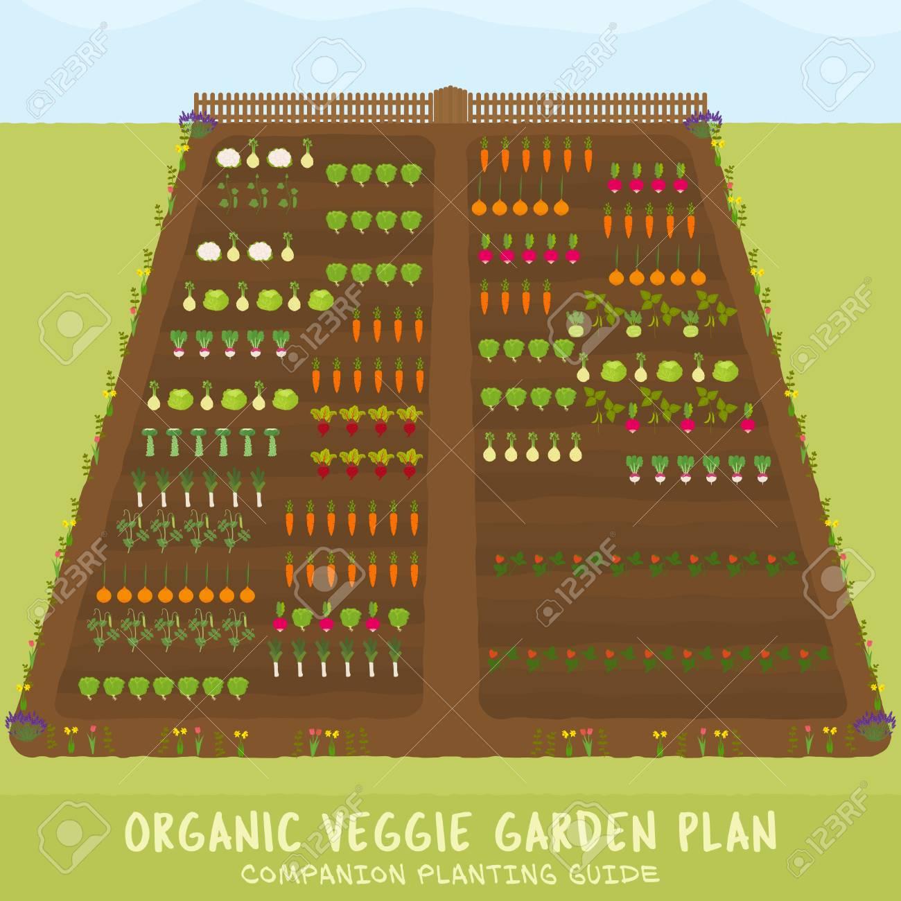 Organic Veggie Garden Plan - Companion Planting Guide - Sowing ...