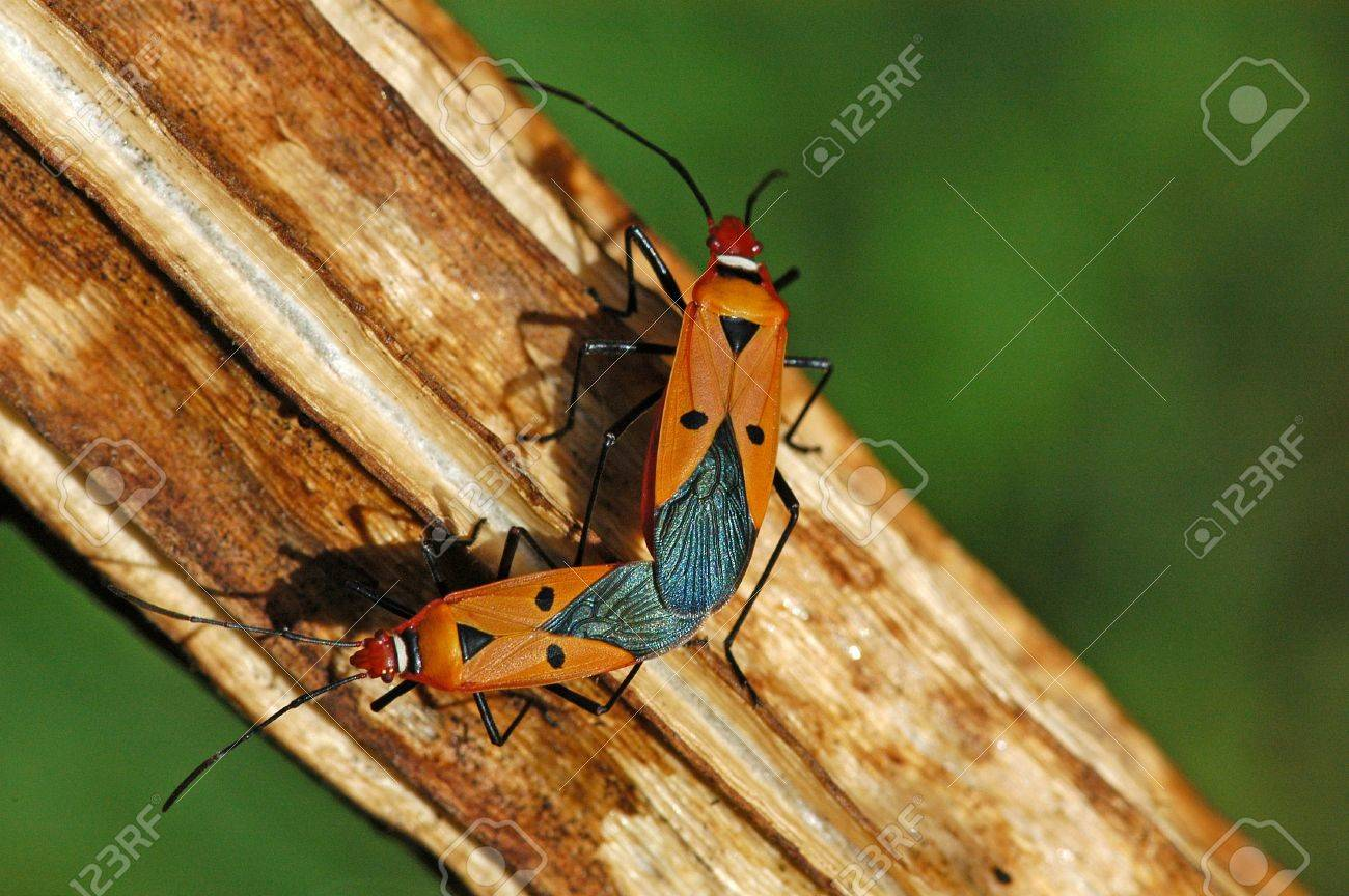 Insects With Human Faces Human Face Insects Mating in