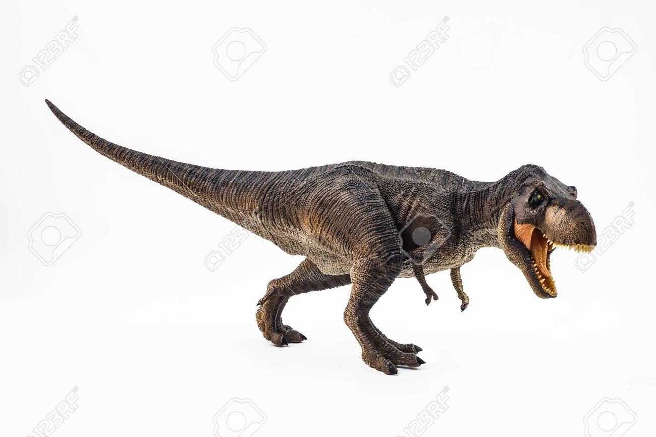 Tyrannosaurus T-rex ,dinosaur on white background . - 122690566