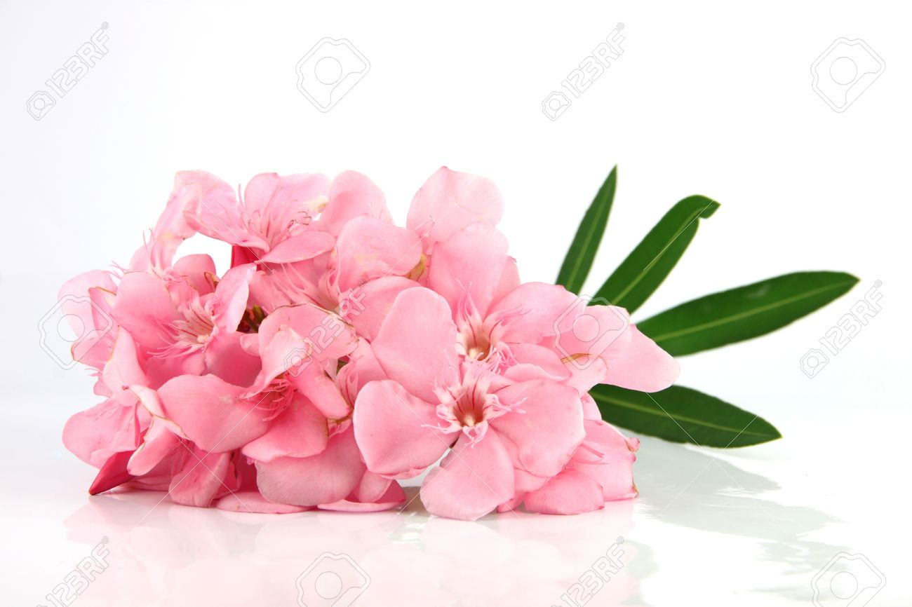 Good Bouquet Of Light Pink Flowers On A White Background. Stock Photo   19494613 Great Ideas