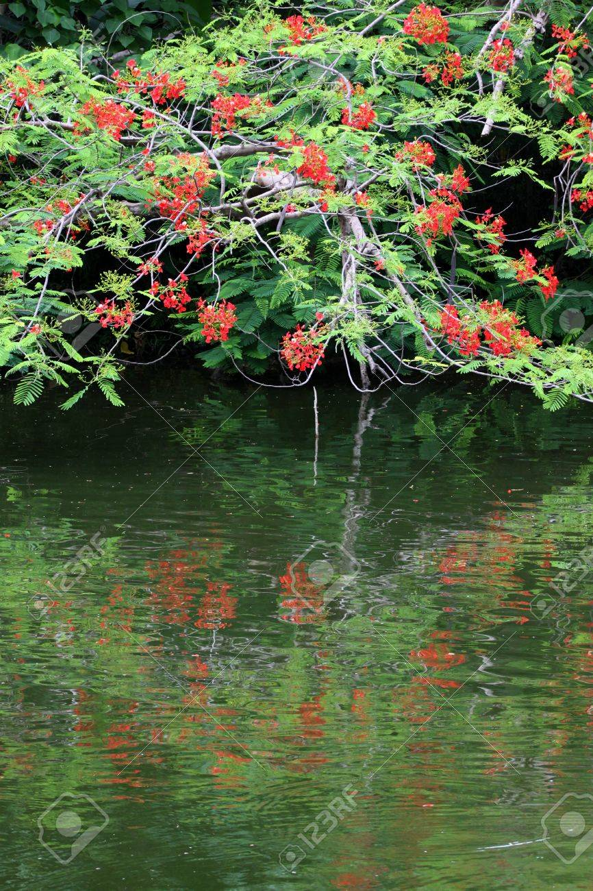 Red Flowers Near The Water You Can See Shadow Of Tree Stock Photo