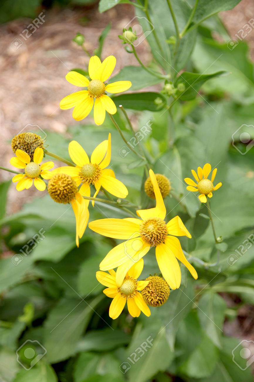 100 weed yellow flower common weeds lawn care mejia