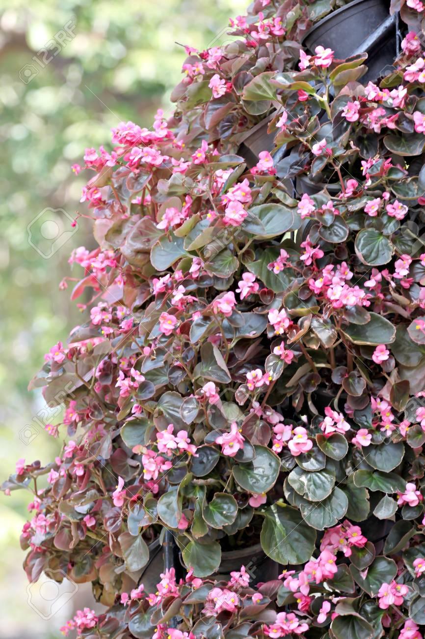 Fleur Rose De L Hiver En Jardiniere Banque D Images Et Photos
