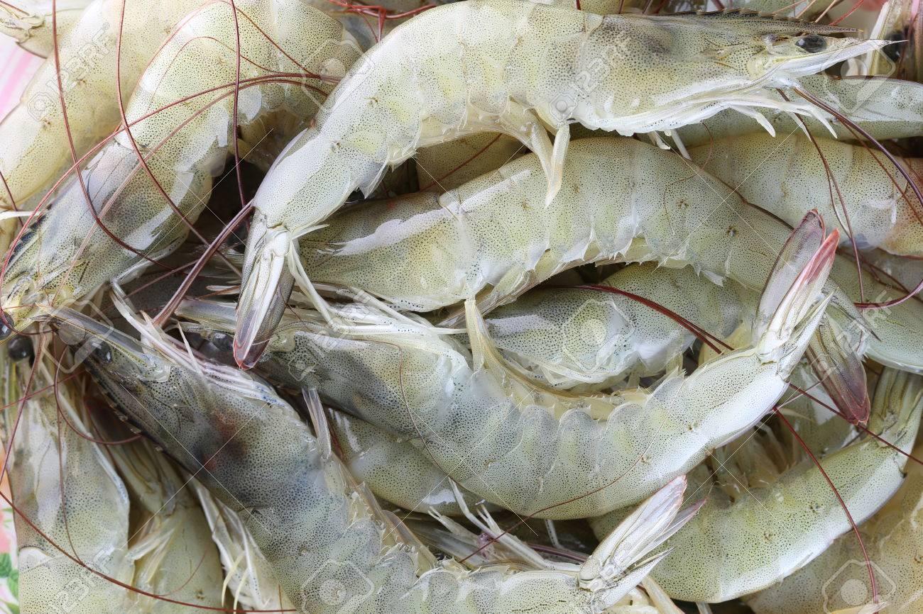 Fresh Raw Shrimp As Garnish In Cooking White Shrimp Or Vannamei