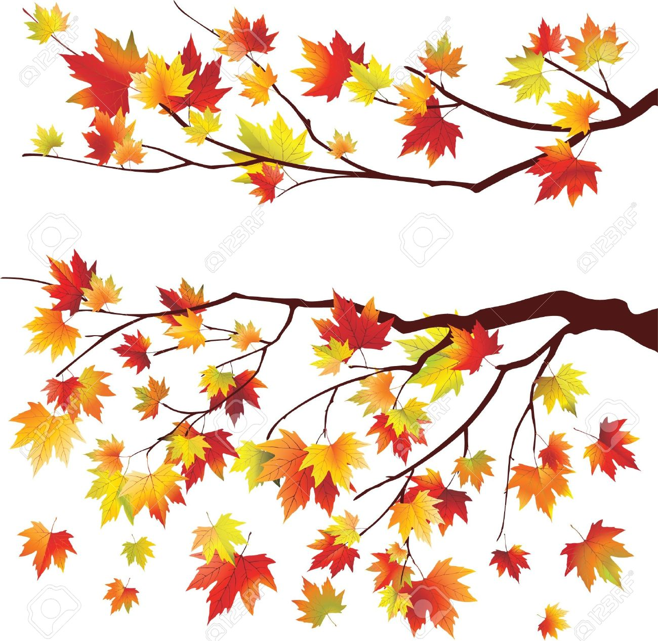 autumn maple tree branches on white background royalty free cliparts rh 123rf com