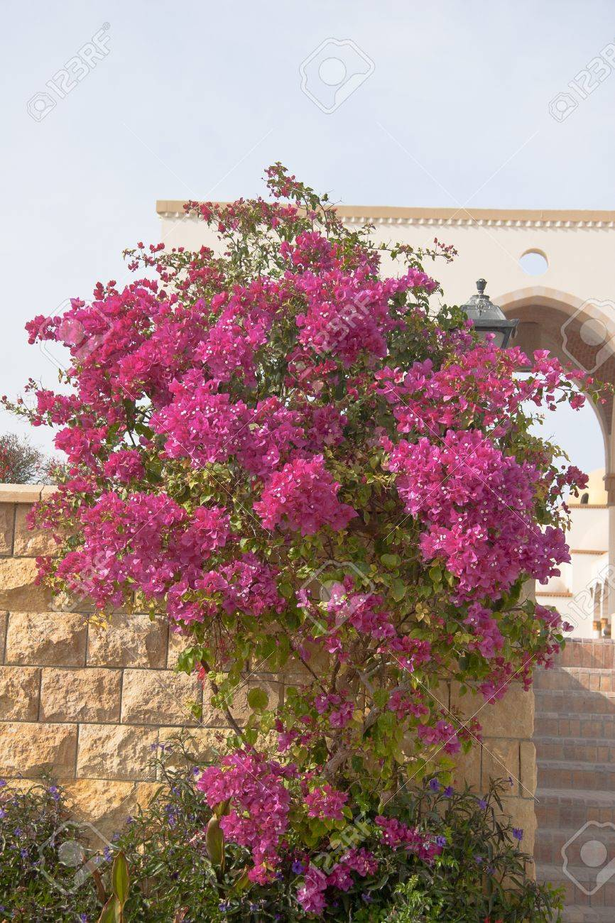 Pink flowers on the bush at summer day stock photo picture and pink flowers on the bush at summer day stock photo 14393313 mightylinksfo